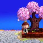 1年目の桜。