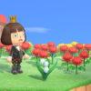 高台に可憐な花が