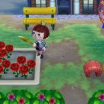 たくましい赤いバラ。